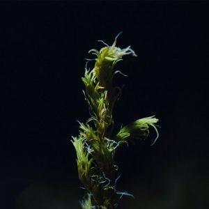 Olafur Arnalds New Moss